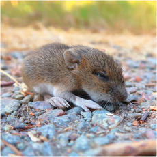 Mouse and vole collection
