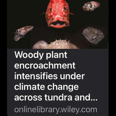 Invasive Species and a Loss of Endemic Species - Woody Plants