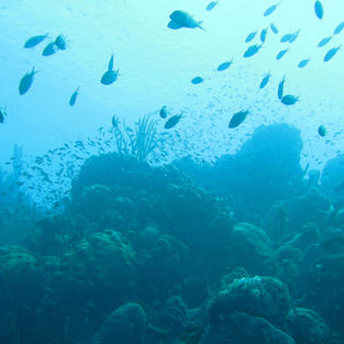 Tropical Coral Marine Ecoregions
