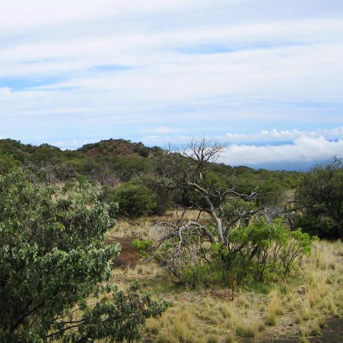 Tropical and Subtropical Grasslands, Savannas, and Shrublands