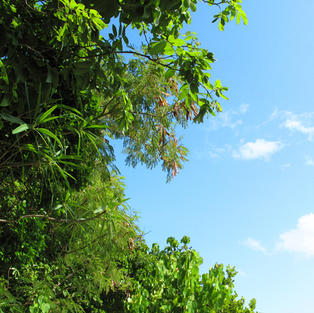 Tropical and Subtropical Moist Broadleaf Forests