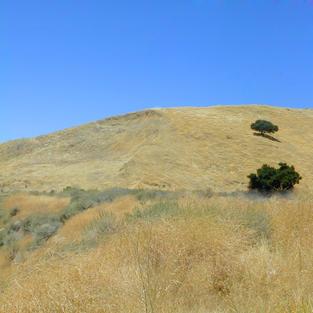 Temperate Grasslands, Savannas, and Shrublands