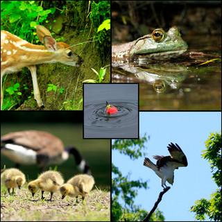 May at Racoon Creek State Park, Pennsylvania