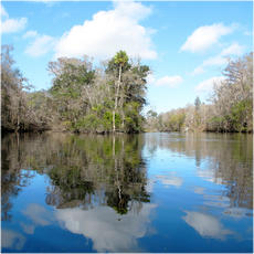 Landscape, Florida collection