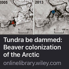 Invasive Species and a Loss of Endemic Species - Beaver