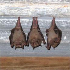 Bat collection
