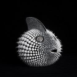 Gros-poisson-lune-envoi