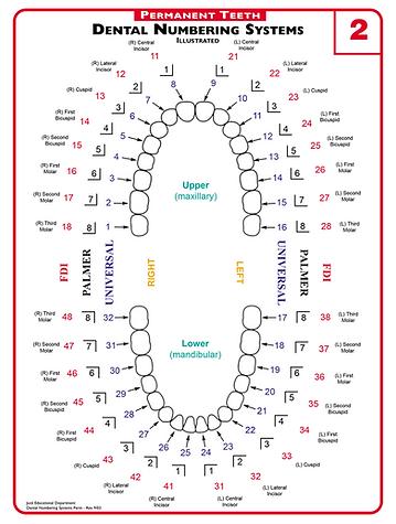 dental numbering system blueskyplan software