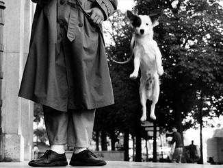 """""""I cani di Elliot Erwitt"""" in mostra a Ca' dei Carraresi"""