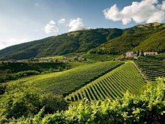 Weekend in cantina: alla scoperta dei vini sulla strada del Prosecco