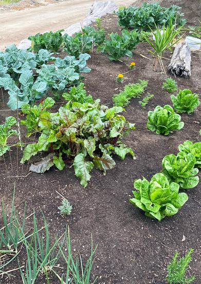 Site Garden