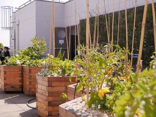 Cueillette Urbaine, l'agriculture en circuits hyper courts (sur les toits de Paris)