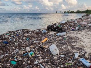 Bas les pailles en plastique qui polluent les océans (testons les pailles en maïs)