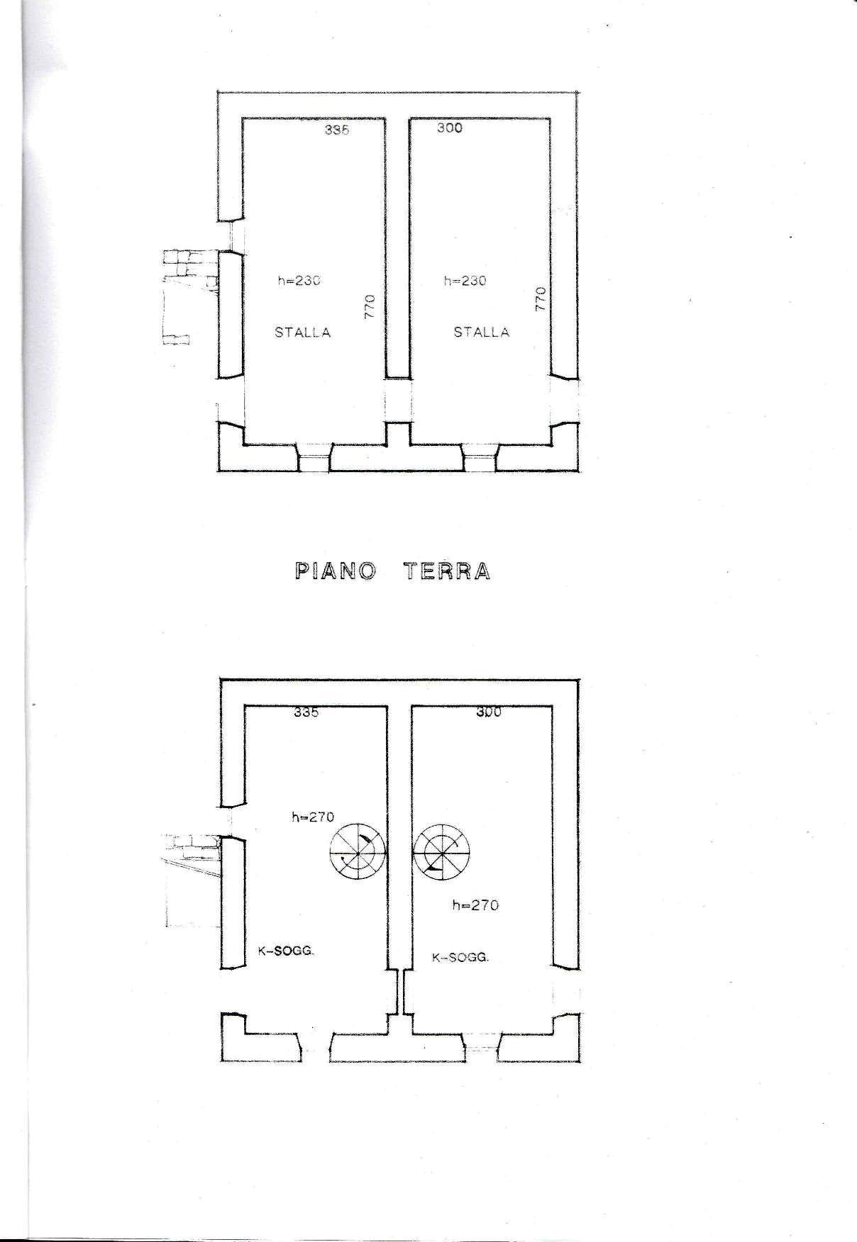 pianta1.jpg