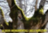 alberi abruzzo