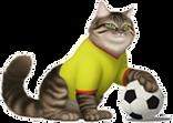 Cat Soccer.png