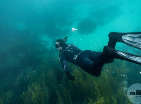 Aireys Inlet Fun Dive