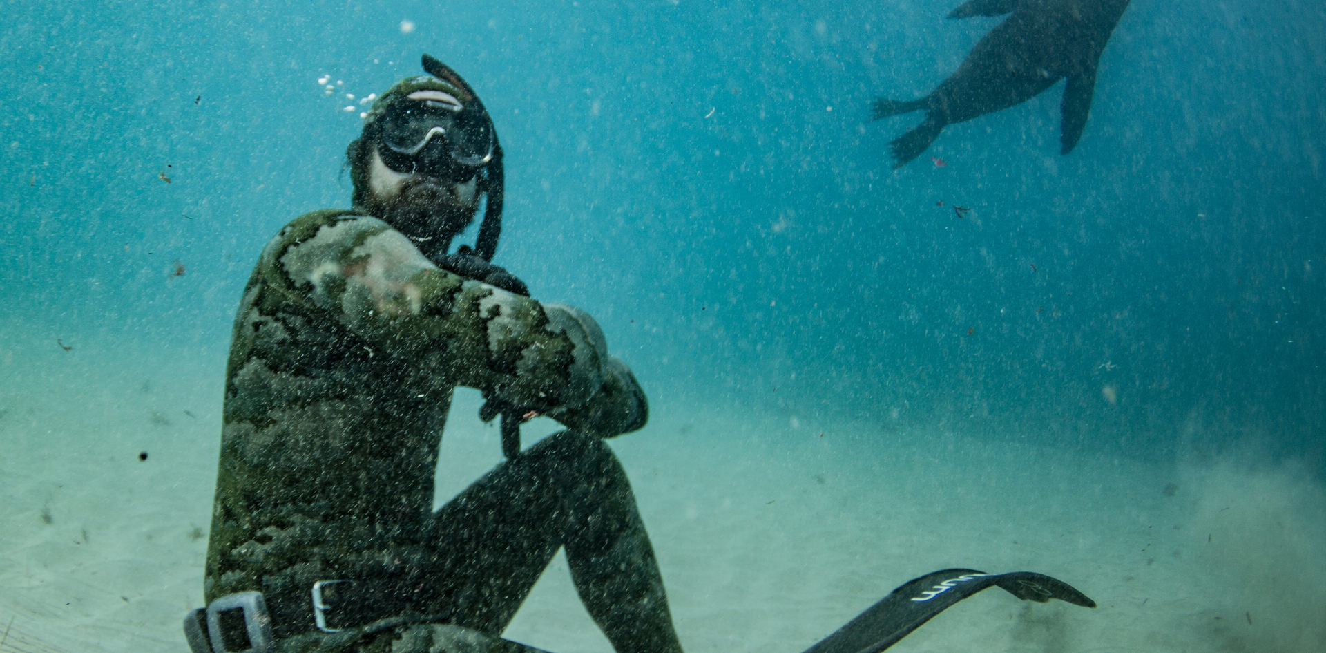 Freediving with Seal