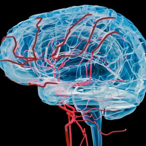 The Impact of Blood-Brain Barriers on Alzheimer's Disease