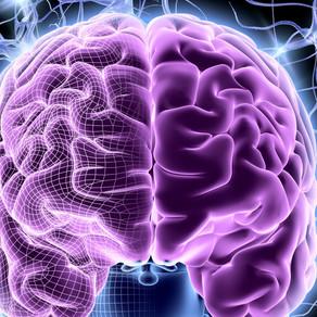 The Role of the Subgenual Anterior Cingulate Cortex in the Brain