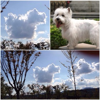 강아지 구름