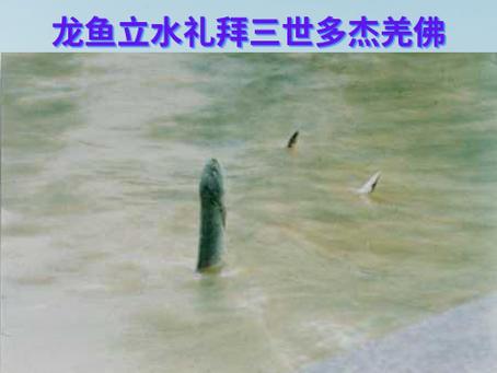 龍魚立水禮拜三世多杰羌佛