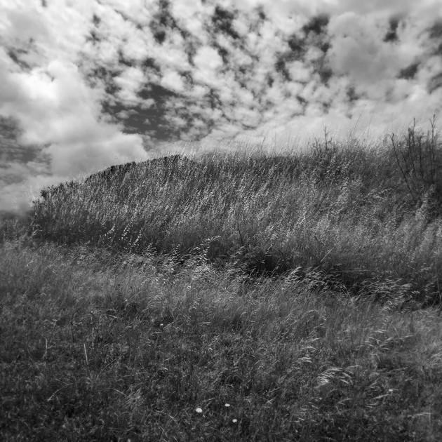 field 2 pm.jpg