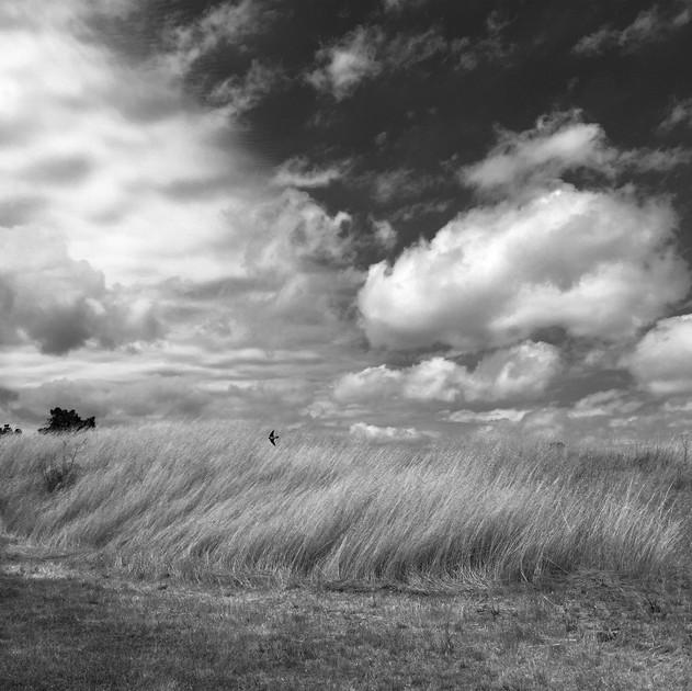 whiton field 1.jpg