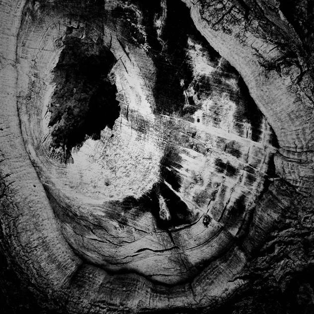 tree crow final.jpg