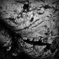 tree skull final.jpg