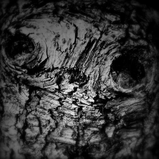 tree skull 2 final.jpg