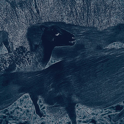 Blue Sheep 2.jpg