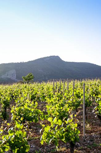 Les vignobles, bien exposés