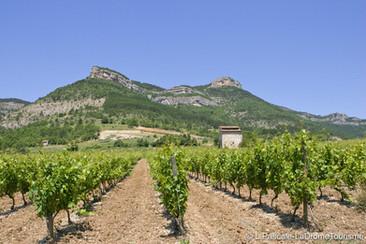Les vignes au pied des montagnes