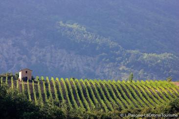 Les vignes de Chatillon en Diois