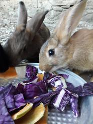 Les bébés lapins