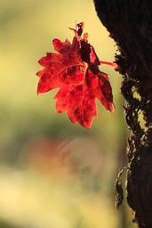 La vigne, un spectacle en toutes saisons