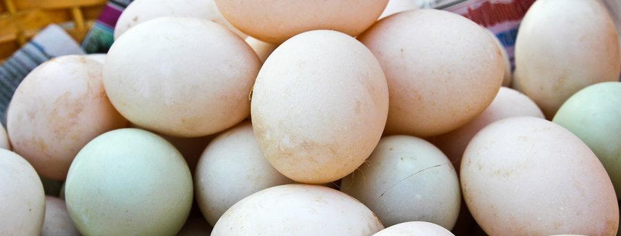 Organic Duck Eggs (half dozen)