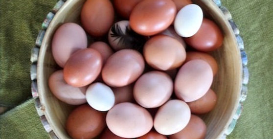 Organically-fed Eggs (half dozen, 10 weeks)