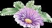 Flor púrpura con las hojas