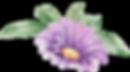 Purpurrote Blume mit Blättern