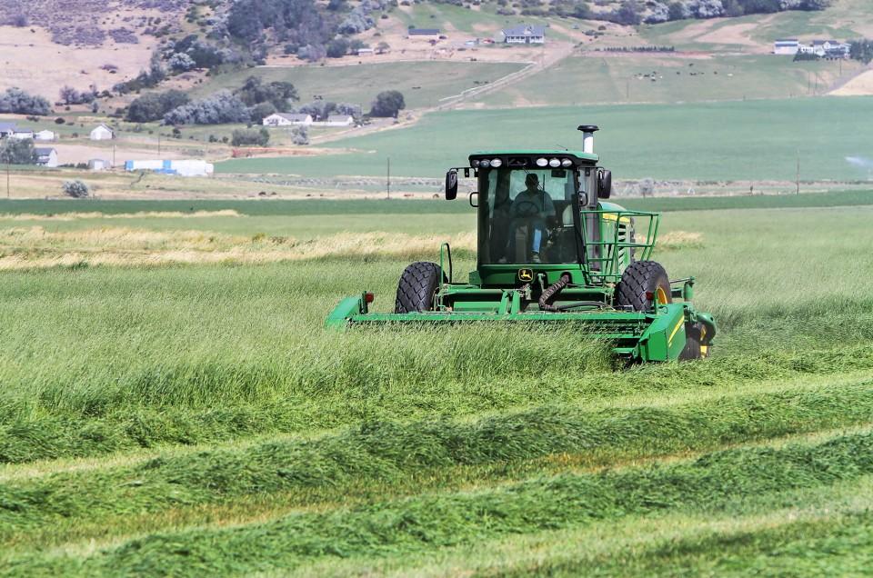 timothy-hay-being-cut-in-field