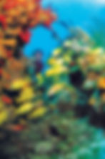 Coral Reef Con.jpg