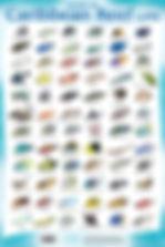 Fish ID.jpg