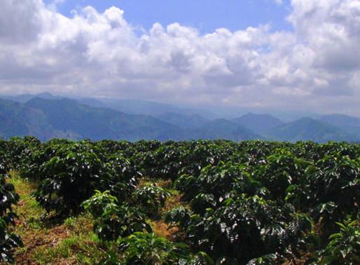 Природные условия произрастания кофейного дерева