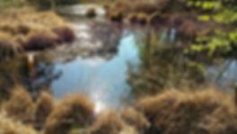 Marche nordique en forêt de Fontainebleau