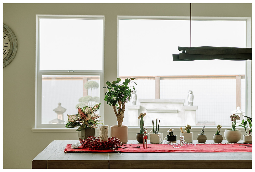 A variety of plants line the farm dining table, which sits against two large windows that look out onto the foggy morning landscape.