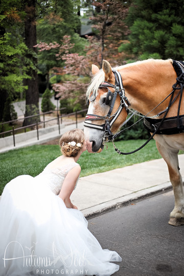 wedding horse and carriage tahoe