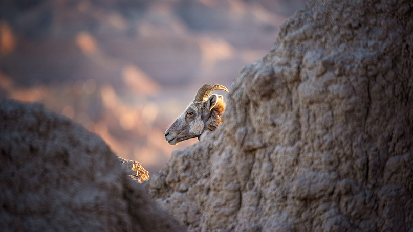 Cleft of the Rock.jpg