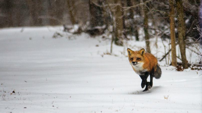 On the Hunt.jpg